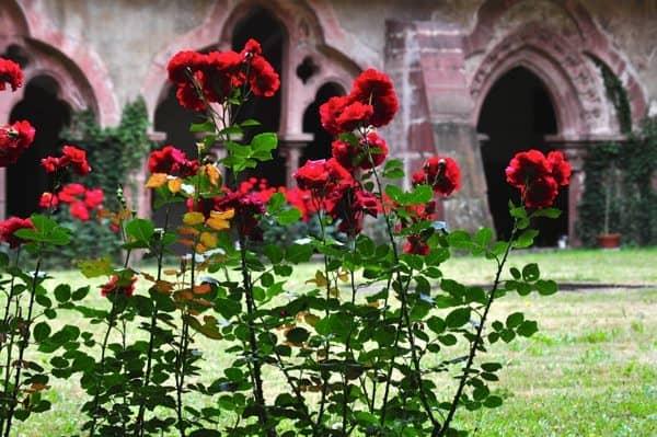 Kloster Bronnbach - 017