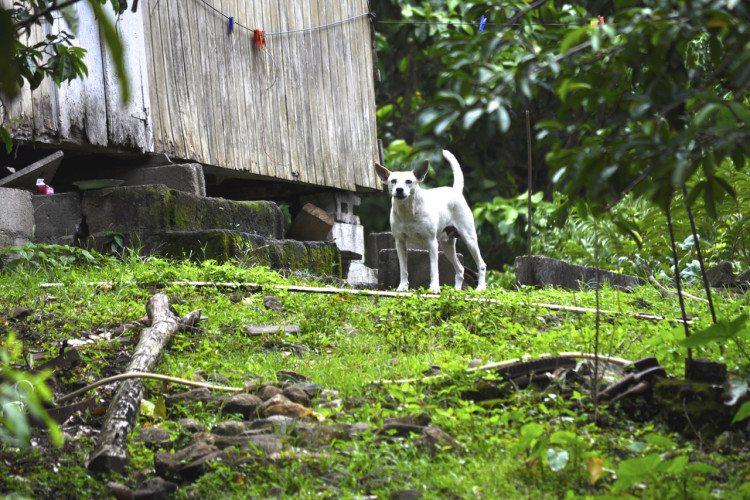 STR Cabrits, Dominica - 00064