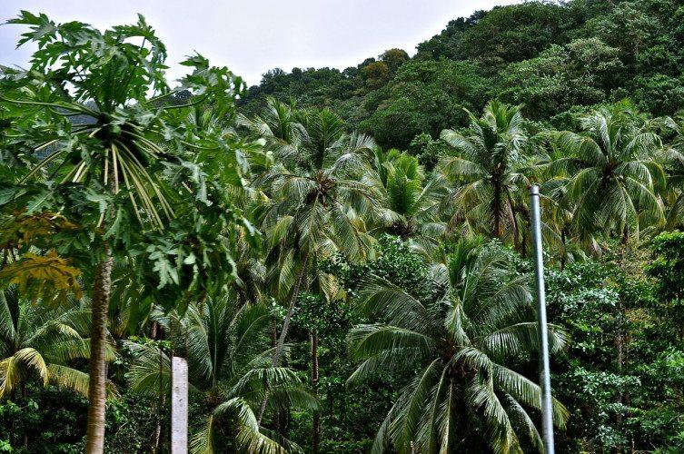 STR Cabrits, Dominica - 00070