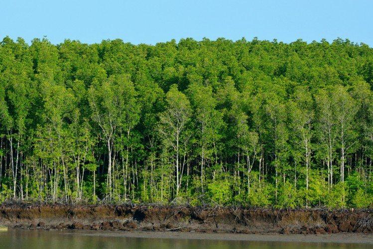 On The Mekong River - 11