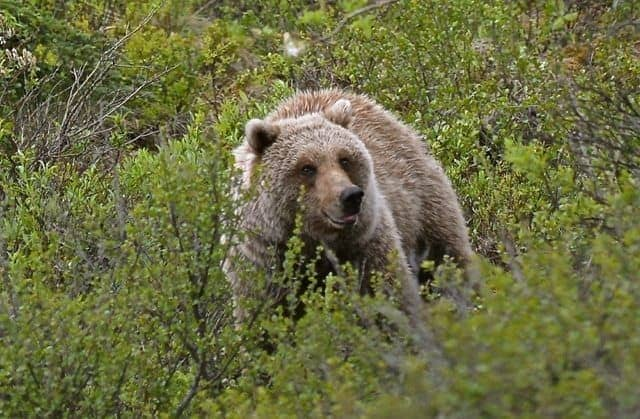 Denali National Park - 240