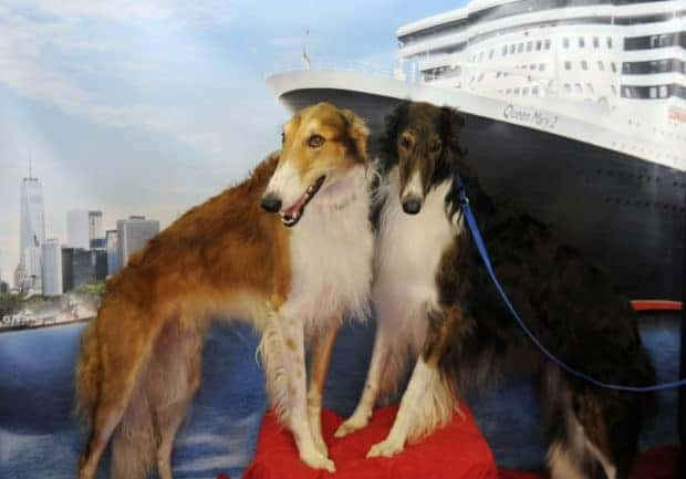 "Cunard hosts ""Doggy"" Tea Service at Westminster Kennel Club Dog"