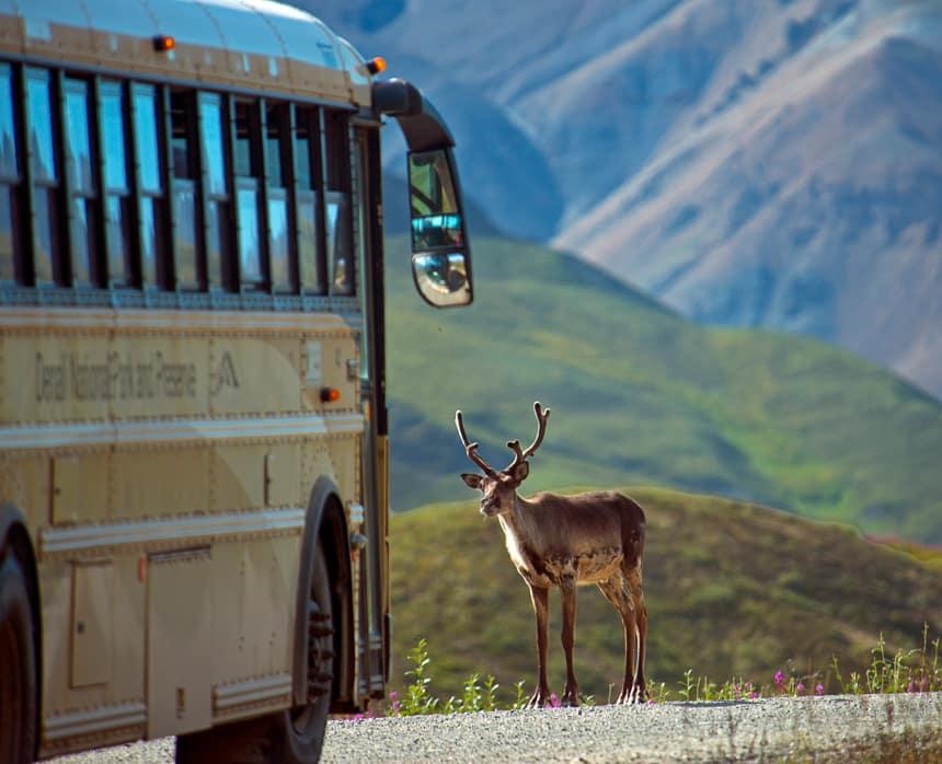 DenaliCaribou2_Alaska_Photographer_Andy_Newman